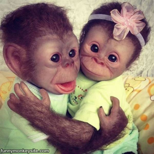 Baby Monkeys : This picture was posted 5/9/2016, it has 1,778 views, 2