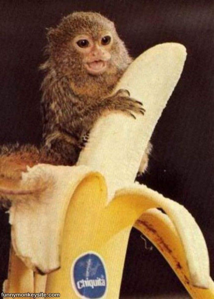 Эта обезьянка с монголоидными чертами лица претендует на звание