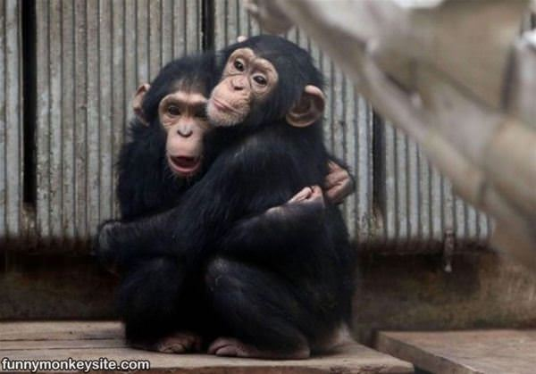 Cute Little Hug - Funny Monkey Pictures