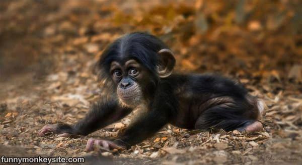 Cute little baby monkeys - photo#23