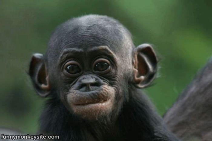 Monkey funny cute - photo#20