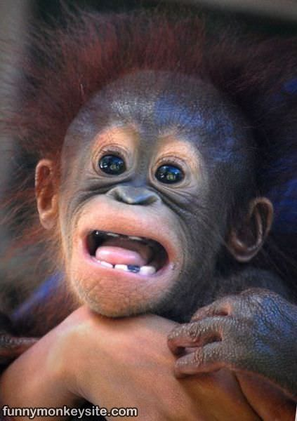 Cute Monkey Face - Funny Monkey Pictures