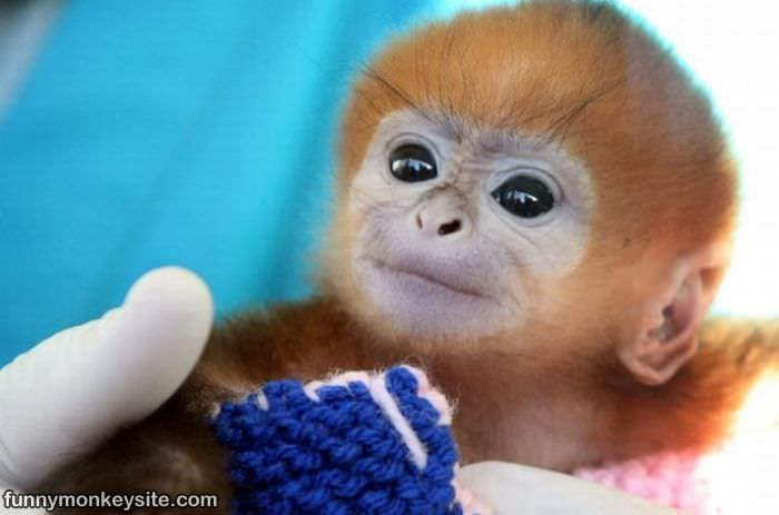 Cute_Monkey_Face_Here - Supercute animals, part 2  - Photos Unlimited