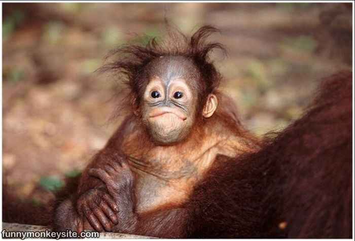 Monkey funny cute - photo#8