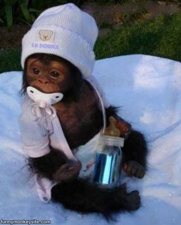 Cutest Baby - Funny Monkey Pictures