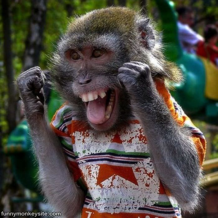 monkey happy 1