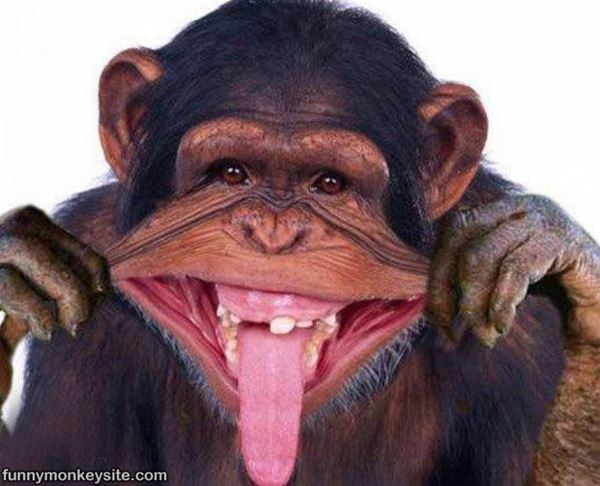 Pictures of Monkeys Making Funny Faces Making a Funny Face