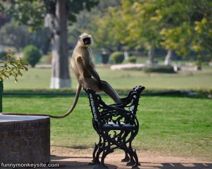 Monkey At The Park