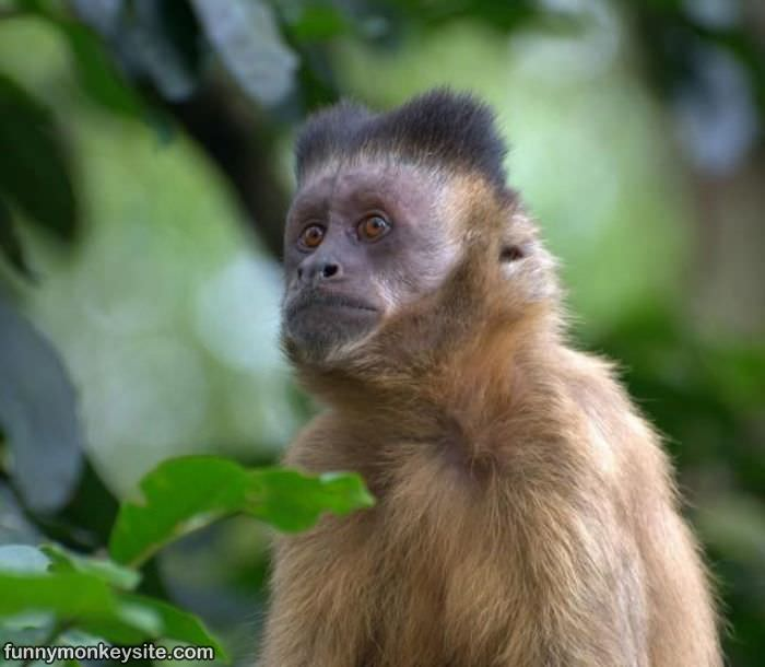 Monkey With Weird Hair - Funny Monkey Pictures