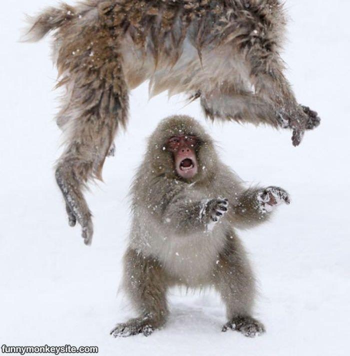 Some Monkey Fun