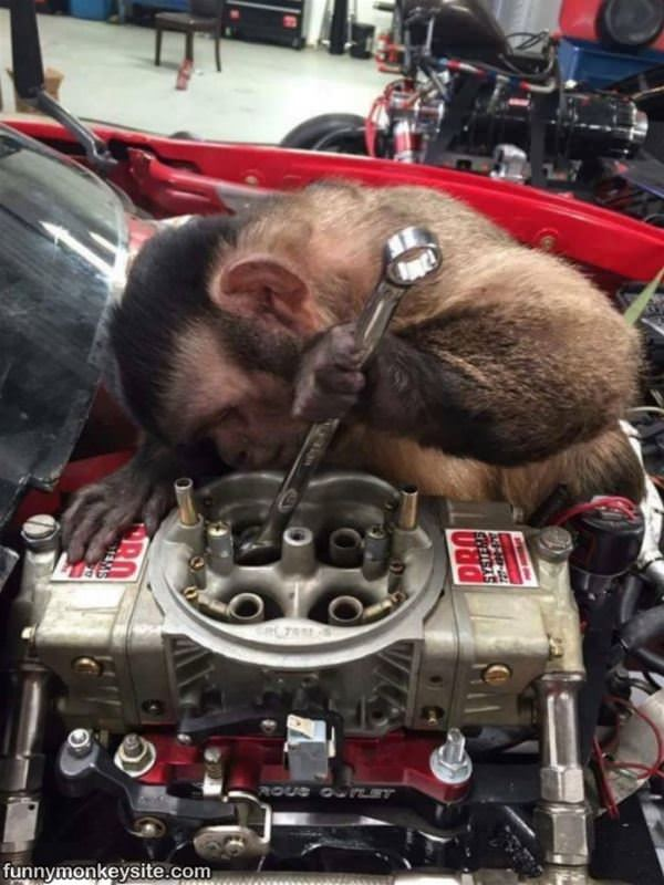 Car Driving Games >> Working On An Engine - Funny Monkey Pictures