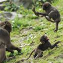 Cute Monkey Play Time