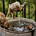 Little Monkey Bath